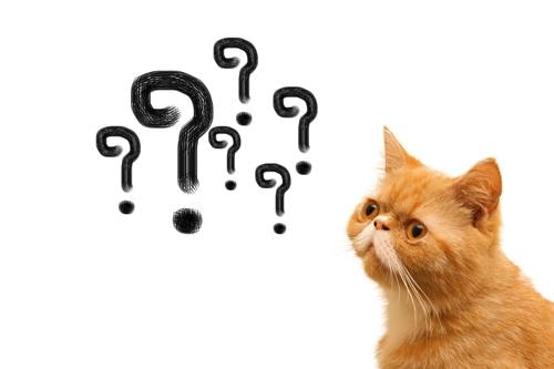 why-cat